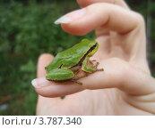 Красивая лягушка на женской руке. Стоковое фото, фотограф Никонович Светлана / Фотобанк Лори