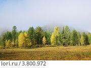 Купить «Туман над лесом. Горный Алтай», фото № 3800972, снято 13 августа 2008 г. (c) Анна Омельченко / Фотобанк Лори