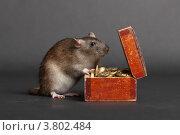 Купить «Крыса заглядывает в старый сундучок с монетами», фото № 3802484, снято 2 сентября 2012 г. (c) Argument / Фотобанк Лори