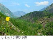 Желтые маки на фоне гор по дороге на Шумакские источники. Стоковое фото, фотограф Евгений Скачков / Фотобанк Лори