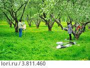 Художники, рисующие цветущий яблоневый сад в Коломенском. Редакционное фото, фотограф Людмила Герасимова / Фотобанк Лори