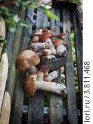 Белые грибы. Стоковое фото, фотограф Дмитрий Ворона / Фотобанк Лори