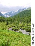 Купить «Лиственничный лес в долине Куйгук. Горный Алтай», фото № 3819224, снято 14 июля 2009 г. (c) Анна Омельченко / Фотобанк Лори