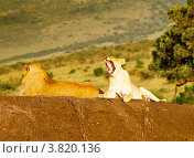 Купить «Лев и львица. Кения», фото № 3820136, снято 8 июня 2012 г. (c) Екатерина Овсянникова / Фотобанк Лори