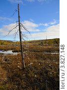Купить «Болото», фото № 3827148, снято 31 августа 2012 г. (c) Валерий Александрович / Фотобанк Лори
