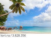 Купить «Тропический пляж на острове Праслин, Сейшельские острова», фото № 3828356, снято 18 августа 2011 г. (c) Dmitry Burlakov / Фотобанк Лори