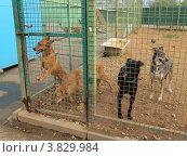 Собаки из приюта. Стоковое фото, фотограф Елена Мусатова / Фотобанк Лори