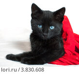Купить «Черный котенок на белом фоне», фото № 3830608, снято 5 сентября 2012 г. (c) Татьяна Макотра / Фотобанк Лори