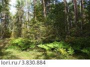 Купить «Смешанный лес летом», фото № 3830884, снято 11 сентября 2012 г. (c) Елена Блохина / Фотобанк Лори