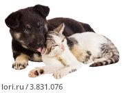 Купить «Щенок лижет кошку», фото № 3831076, снято 16 сентября 2007 г. (c) Алексей Ухов / Фотобанк Лори