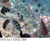 Цветные рыбки. Стоковое фото, фотограф Марат Сафаров / Фотобанк Лори