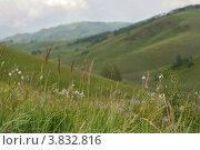 Трава в горах. Стоковое фото, фотограф Масюк Светлана / Фотобанк Лори