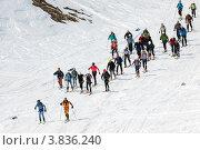 Купить «Ски-альпинизм. Камчатка», фото № 3836240, снято 21 апреля 2012 г. (c) А. А. Пирагис / Фотобанк Лори