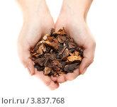 Купить «Женские руки с горстью сушеных грибов», фото № 3837768, снято 15 сентября 2012 г. (c) Кекяляйнен Андрей / Фотобанк Лори
