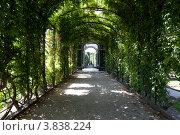 Купить «Пергола в парке дворца Шенбрунн в Вене», фото № 3838224, снято 15 августа 2012 г. (c) Наталья Волкова / Фотобанк Лори