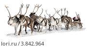 Купить «Санта-Клаус управляет оленьей упряжкой. Белый фон», фото № 3842964, снято 18 января 2018 г. (c) Владимир Мельников / Фотобанк Лори