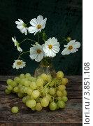 Космея и белый  виноград. Стоковое фото, фотограф Короленко Елена / Фотобанк Лори