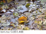 Лист в луже. Стоковое фото, фотограф Александр Аникеев / Фотобанк Лори