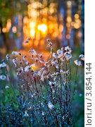 Купить «Сухая трава на фоне заходящего солнца», фото № 3854144, снято 19 сентября 2012 г. (c) Ольга Денисова / Фотобанк Лори