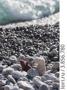 Мышки на море. Стоковое фото, фотограф Алексей Судариков / Фотобанк Лори