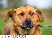 Купить «Собака на улице в солнечный летний день», эксклюзивное фото № 3857308, снято 22 сентября 2012 г. (c) Николай Винокуров / Фотобанк Лори