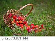 Купить «Корзина с клубникой на зеленой траве», фото № 3871144, снято 2 июля 2012 г. (c) Ольга Денисова / Фотобанк Лори