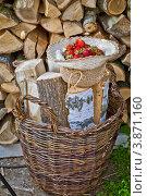 Купить «Клубника в шляпе на фоне колотых чурок», фото № 3871160, снято 2 июля 2012 г. (c) Ольга Денисова / Фотобанк Лори