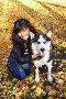 Девушка с собакой породы сибирский хаски (siberian husky) в осеннем парке, фото № 3872244, снято 22 сентября 2012 г. (c) ElenArt / Фотобанк Лори