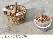 Купить «Плетеная корзина с белыми грибами и пластиковое ведро с подосиновиками и подберезовиками», эксклюзивное фото № 3872696, снято 24 сентября 2011 г. (c) lana1501 / Фотобанк Лори
