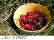 Пиала с сочными красными ягодами в траве. Стоковое фото, фотограф Елена Круглова / Фотобанк Лори