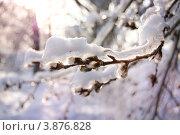 Обледеневшая ветка вербы под снегом. Стоковое фото, фотограф Елена Круглова / Фотобанк Лори