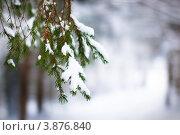 Ветка ели под снегом на размытом зимнем фоне. Стоковое фото, фотограф Елена Круглова / Фотобанк Лори