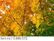 Осенние цвета. Стоковое фото, фотограф Госьков Александр / Фотобанк Лори