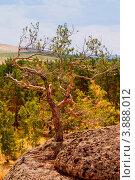 Купить «Скалы и деревья», фото № 3888012, снято 29 июля 2012 г. (c) Хайрятдинов Ринат / Фотобанк Лори