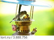 Купить «Пятнистая мухоловка.Spotted Flycatcher», фото № 3888756, снято 30 июня 2012 г. (c) Ксения Крылова / Фотобанк Лори