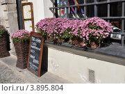 Городские цветы (2012 год). Редакционное фото, фотограф Светлана Пирожук / Фотобанк Лори