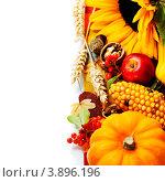 Купить «Натюрморт с тыквой, подсолнухом, плодами и ягодами», фото № 3896196, снято 21 сентября 2012 г. (c) Наталия Кленова / Фотобанк Лори
