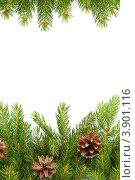 Рождественская рамка. Еловые ветки с шишками. Стоковое фото, фотограф Сергей Фигурный / Фотобанк Лори