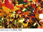 Плоды осени. Стоковое фото, фотограф Яблонских Татьяна / Фотобанк Лори