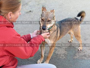 Волонтер приюта для бездомных животных работает с собакой
