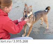 Купить «Волонтер приюта для бездомных животных работает с собакой», фото № 3915268, снято 7 сентября 2012 г. (c) Елена Мусатова / Фотобанк Лори
