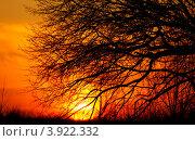 Дерево. Закат. Стоковое фото, фотограф Виктор Четошников / Фотобанк Лори