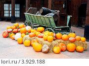 Купить «Хэллоуин», фото № 3929188, снято 27 сентября 2012 г. (c) Хайрятдинов Ринат / Фотобанк Лори