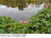 Осеннее озеро. Стоковое фото, фотограф Копытина Анжелика / Фотобанк Лори