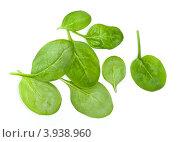 Купить «Листья молодого шпината на белом фоне», фото № 3938960, снято 5 июля 2010 г. (c) Лисовская Наталья / Фотобанк Лори