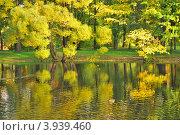 Купить «Золотые ивы у реки в осеннем парке», фото № 3939460, снято 3 октября 2009 г. (c) Татьяна Савватеева / Фотобанк Лори
