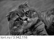 Важный кот. Стоковое фото, фотограф Евгений Тучков / Фотобанк Лори