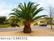 Купить «Пальмы», фото № 3943512, снято 26 сентября 2012 г. (c) Хайрятдинов Ринат / Фотобанк Лори