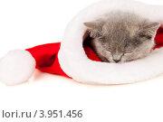 Купить «Котенок спит в шапке деда мороза», фото № 3951456, снято 25 июля 2012 г. (c) Чирцова Наталья / Фотобанк Лори
