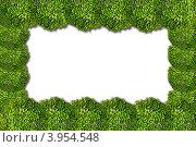 Рамка из растений. Стоковая иллюстрация, иллюстратор Евгений Егоров / Фотобанк Лори